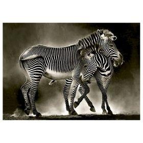 Пъзел Едука 500 части Zebras