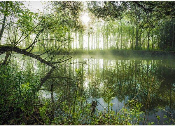 Пъзел Schmidt от 1000 части - Магическата гора, Щефан Хефеле
