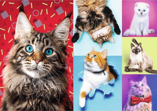 Пъзел Trefl от 1000 части - Щастливи котки