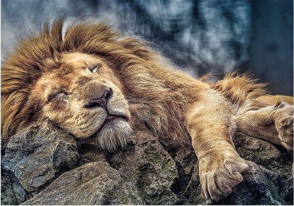 Пъзел Trefl от 1000 части - Спящ лъв
