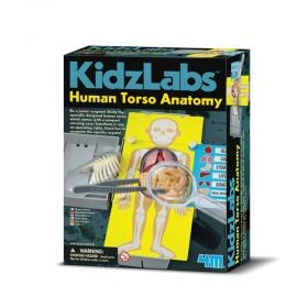 Образователен комплект 4M - Анатомия човешкият торс
