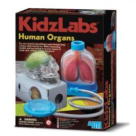Образователен комплект 4M - Човешките органи