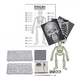 Образователен комплект 4M - Човешкият скелет