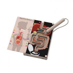 Образователен комплект 4M - Храносмилателната система